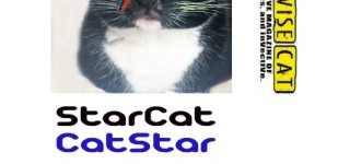 ISSUE 33: CATSTAR/STARCAT